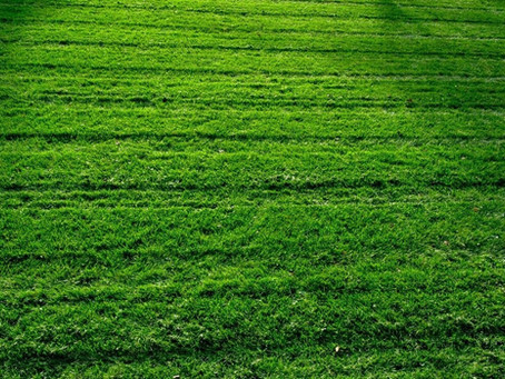 The Problem with Lawns