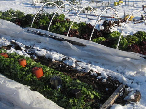 What to Plant In Winter