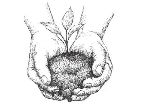 Seed Extinction?