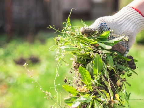 Are Weeds Really 'Bad'?