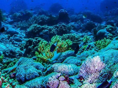 Reef-er Madness