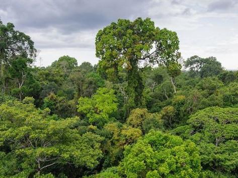 Should we let the Amazon burn?