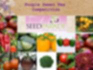 Purple Sweet Pea Alotment