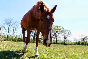 cheval champ