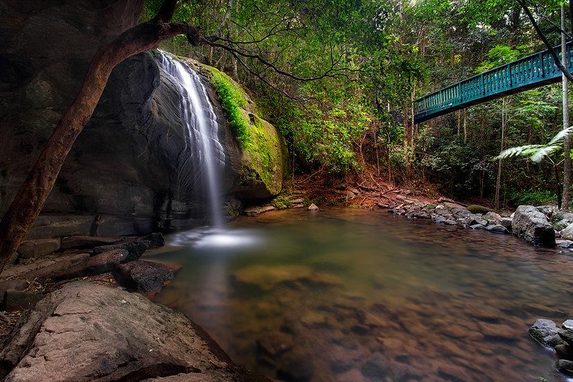 Buderim Waterfall