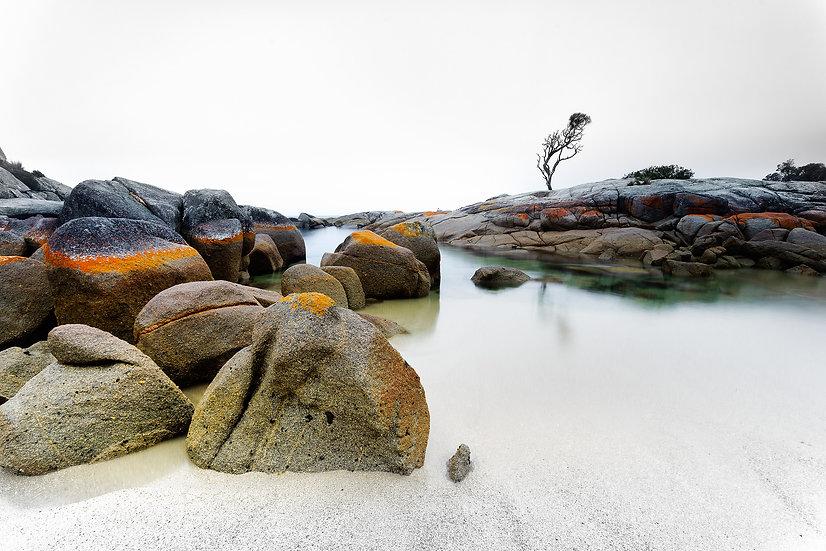 The Tree - Tasmania