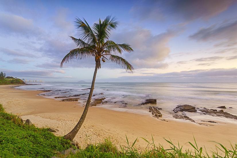 Palm Tree - Mooloolaba