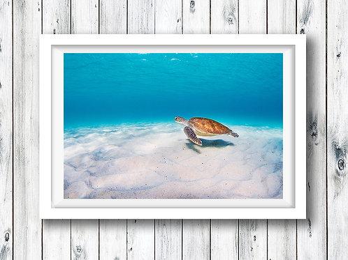 Turtle - Kirra
