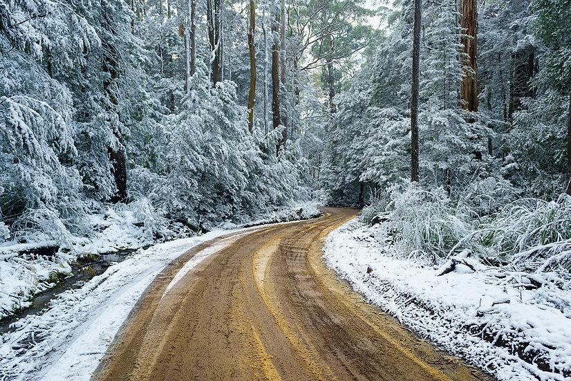 Snow at Mt Field