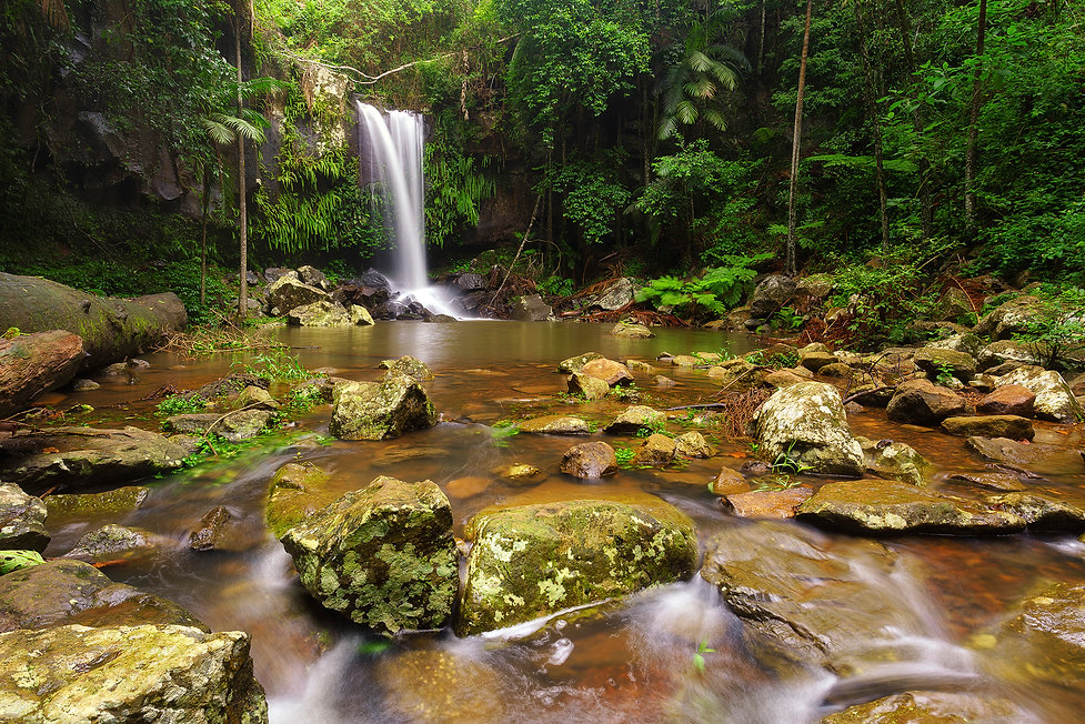 A guide to photographing the Gold Coast Curtis Falls Waterfall Gold Coast