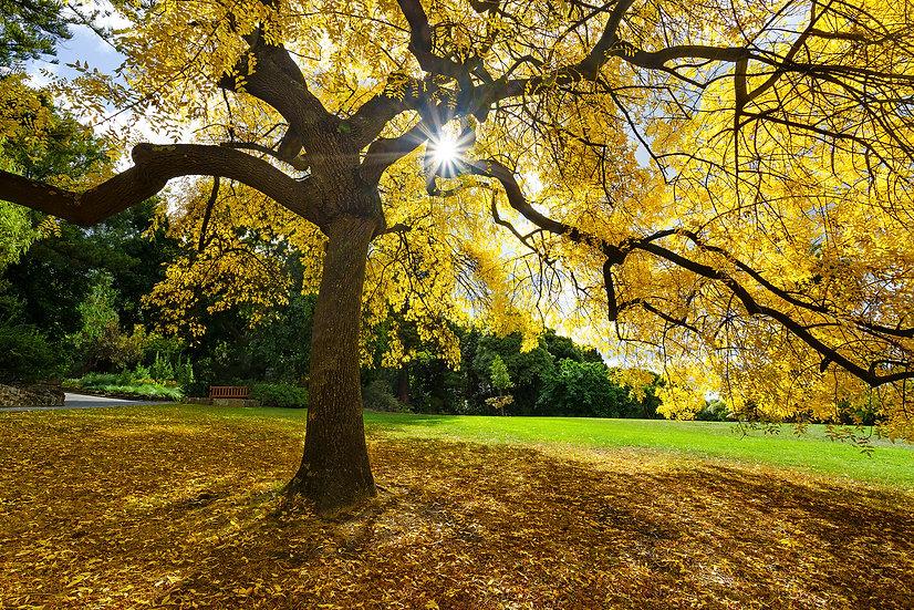 Autumn in Hobart