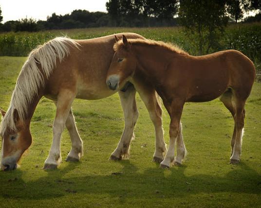 paardjes3 copy-2.jpg