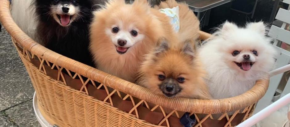 来年の犬祭開催について