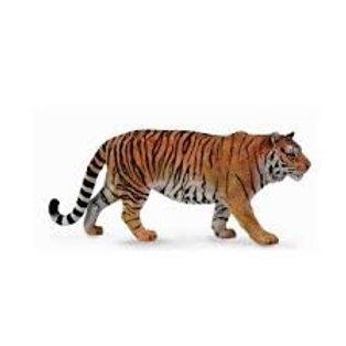 SIBERIAN TIGER     88789