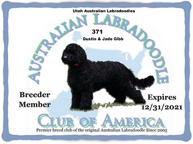 371 Utah Australian Labradoodles __ Dust