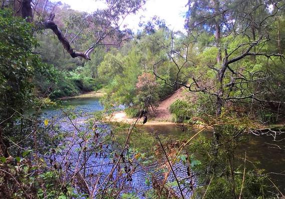 river bushwalk camp sydney.jpg