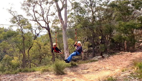 Greatest flying fox at an Aussie bush camp