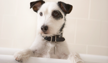 dog bath, dog washing, dog grooming
