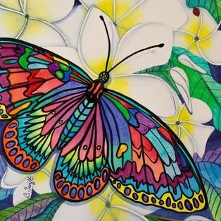 Frangepani Flutter