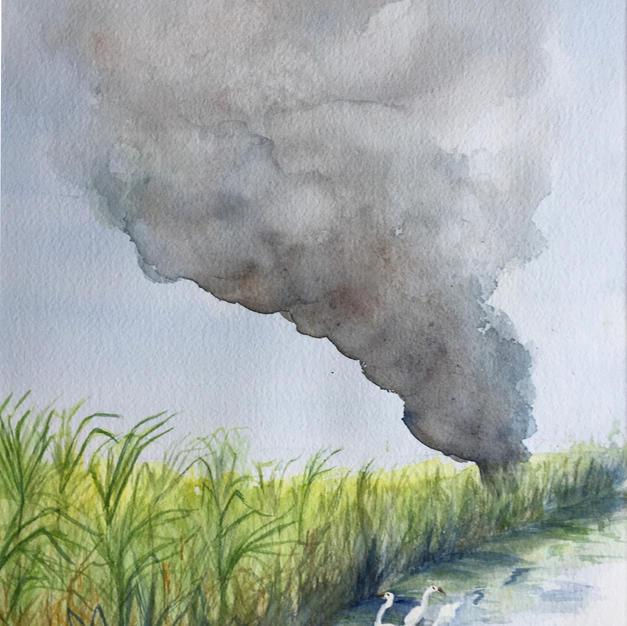 Burning the Cane