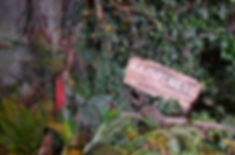 Rum Story Rain Forest1.JPG