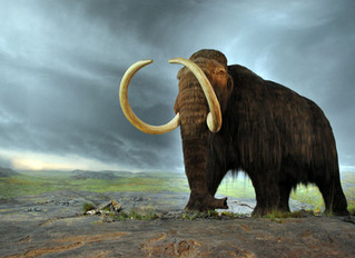 The Woolly Mammoths of Medicine