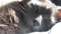Soft Kitty 47