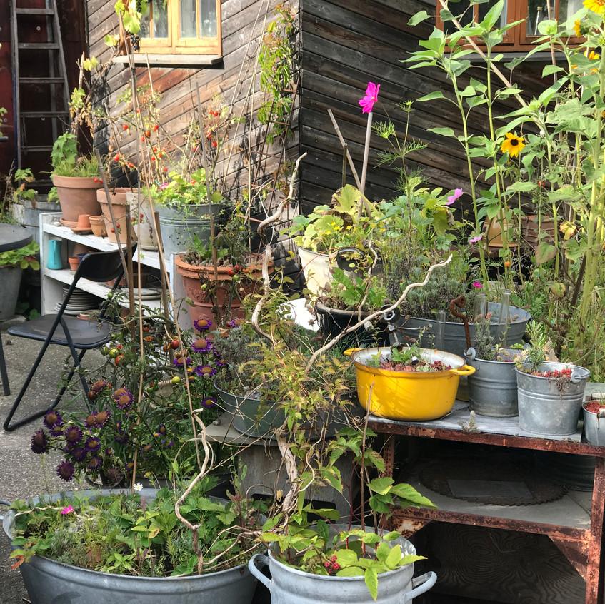 Local garden in Christiania