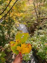 Bronx Botanical Garden & Arthur Avenue (Little Italy) - October 2020