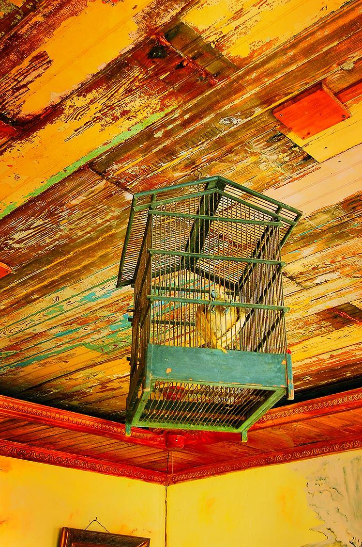 Parrot of Mundo Bizarro