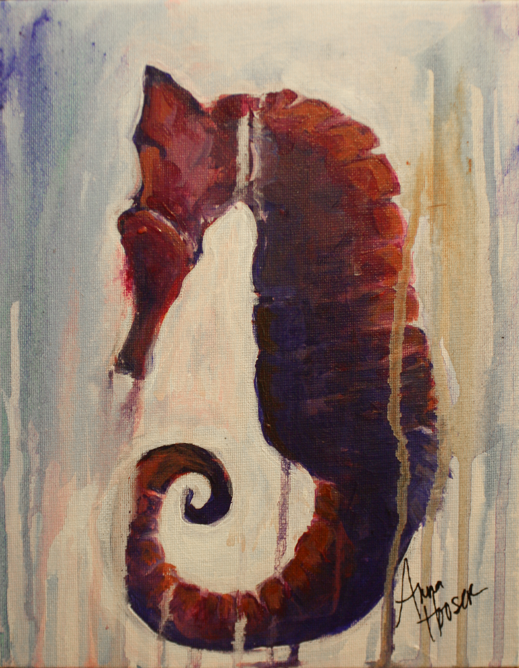 Seahorse  ©Anna Hooser