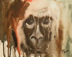Gorilla  ©Anna Hooser