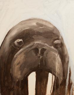 Walrus  ©Anna Hooser
