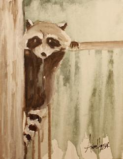 Raccoon  ©Anna Hooser