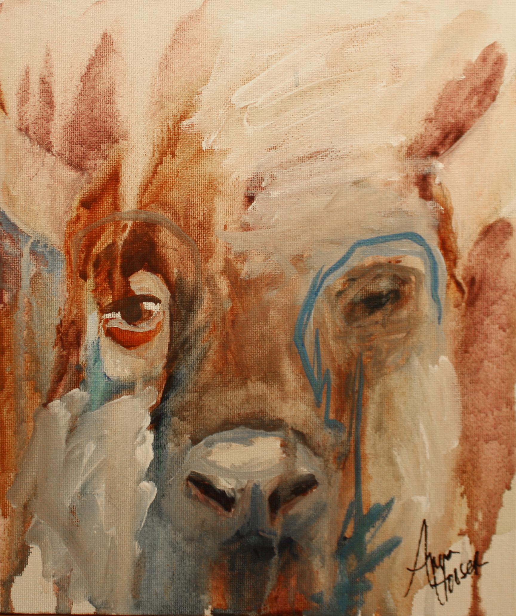 Ox  ©Anna Hooser