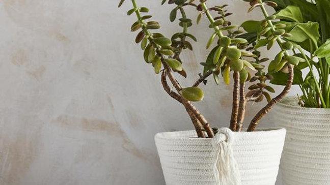 Eco Twist Plant Pot