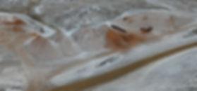 Scoria Stockpile