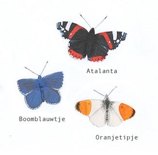 vlindersinsta.jpg