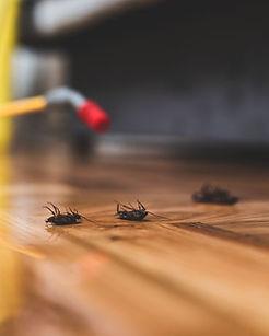 Pest_Control_iStock_1158253619.jpg