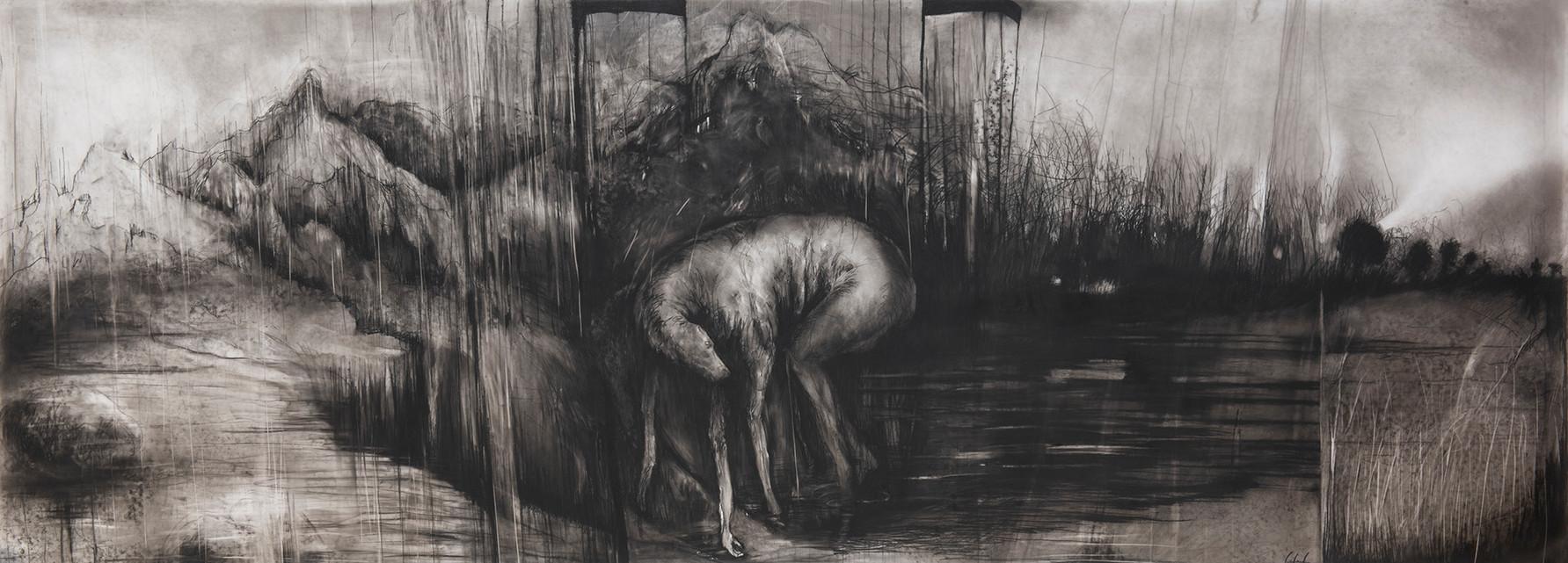 nocturne canin 90 x 250.jpg
