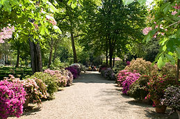 Orto_Botanico_viale_azalee.jpg