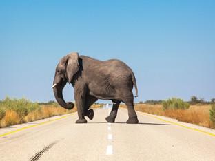 Bolesworth-Botswana.jpg