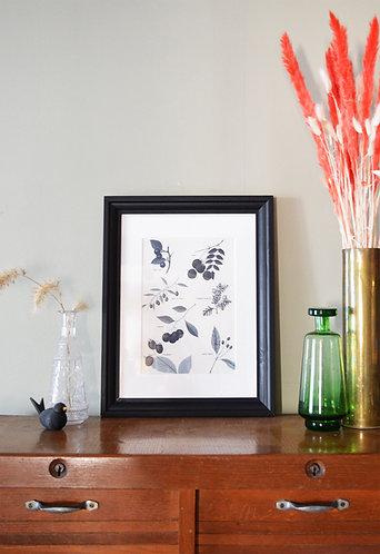 Illustration botanique - Fruits d'arbustes
