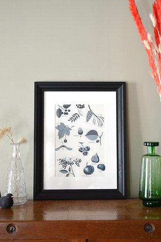 Illustration botanique - Cueillette