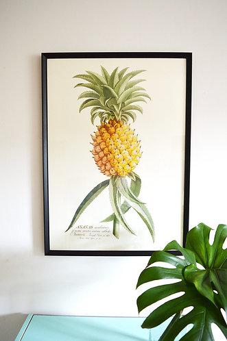 Affiche Botanique - Ananas