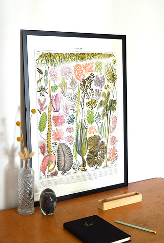 Affiche Algues