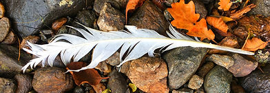 White feather 9.19.53 AM copy.jpg