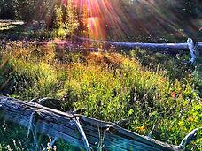 Scab meadow sun spangle copy.jpg