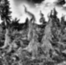 Ghost tree copy.jpg