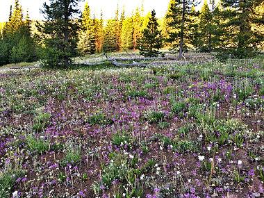Scab blossoms copy.jpg